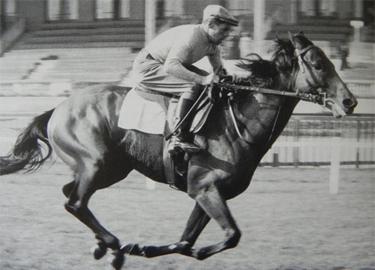 Enrico Camici in sella a Ribot