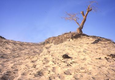 l'albero perduto