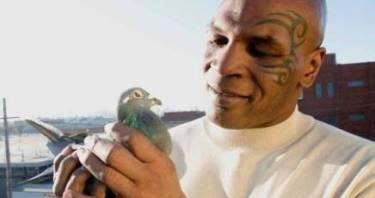 L'allevatore di piccioni